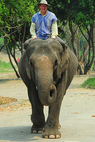 elephant-ride-patara-elephant-farm-chiang-mai-thailand